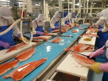 Ứng dụng của băng tải trong công nghiệp thực phẩm